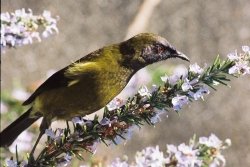 Garden Bird Survey Helps with Biodiversity Action